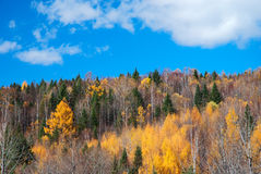 Hill. This photo was taken in a fall noon, in northeast China Royalty Free Stock Photography