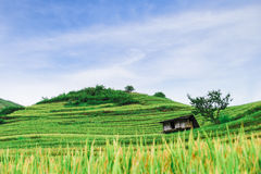 Hill of rice terrace fields and stilt house Stock Photo