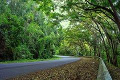hill road Obraz Stock