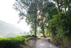 Hill Road inside Tea Plantation with Morning Mist, Cameron Highland, Malaysia. Cameron Highlands is the largest tea-growing region in Malaysia Royalty Free Stock Image