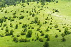 Hill slope meadow Royalty Free Stock Images