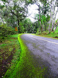Hill slope. The road with moss on its curbs  goes downhill through the forest Stock Image