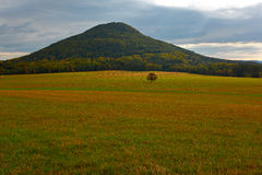 Hill with solitaire tree in meadow. Beautiful landscape. Evening in hills with villages, Czech national Park Ceske Svycarsko, Bohe Royalty Free Stock Images