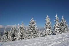 hill sosny śnieżne pokrycia Zdjęcie Royalty Free