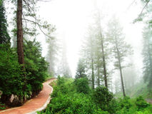 Hill Station Path Stock Images