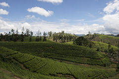 Hill and Tea plantations. Ella, Sri Lanka. Tea plantation fields on the green hills. Ella, Sri Lanka stock image
