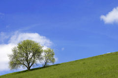 Hill with tree and blue skies Royalty Free Stock Photo