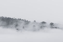 Hill and tree in the fog Royalty Free Stock Image