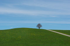 Hill and tree near Steingaden, Germany Royalty Free Stock Photography