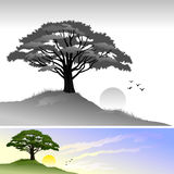 Hill Tree and Sun Landscape. Silhouette of  tree and sunset landscape with flying bird creates a perfect scene when sun sets Stock Photo