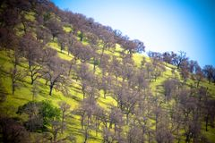 Hill and trees Royalty Free Stock Photo