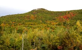 Hill with trees changing color in Autumn