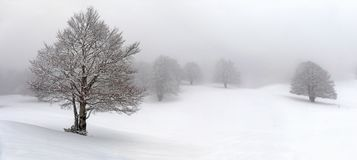 Winter mountain landscape, path and trees covered with snow. Hill and trees covered with snow, in the background you can see the snow-covered forest. Daytime Stock Photo