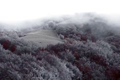 The hill. Trees in the frost on the hill Stock Photos