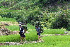 Hill tribal people in Vietnam Stock Photos