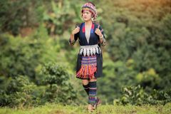Free Hill Tribe Coffee Plantation,Akha Woman Picking Red Coffee On Bouquet On Tree Royalty Free Stock Photo - 107897205