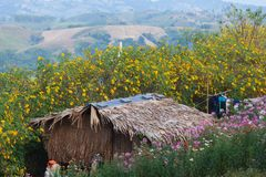 Hill tribe house. Among bloosome flower on November season, Maehongsorn, Northern of Thailand royalty free stock images