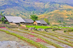 Hill tribe of rice crops Stock Images