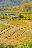 Hill tribe rice crops in Sapa Royalty Free Stock Images
