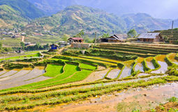Hill tribe rice terraced fields royalty free stock photos