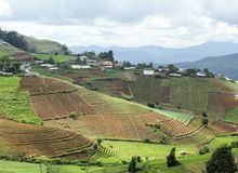 Hill tribe village and terraced vegetable field Stock Photos