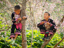 Hill tribes child on the tree. Stock Photos