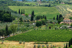 Hill Of Tuscany With Vineyard Royalty Free Stock Image
