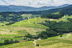 Hill and vineyards, Beaujolais, France Stock Photos