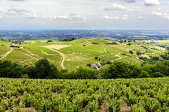 Hill and vineyards during a sunny day, Beaujolais, France Royalty Free Stock Photography