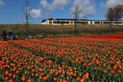 Train drives past flower field in Holland. Hillegom, The Netherlands - April 17, 2017: People with bicycles stand next to a flower field while a train drives by Royalty Free Stock Photos