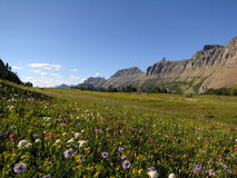 Hillflowers. Flowers and mountains Royalty Free Stock Image