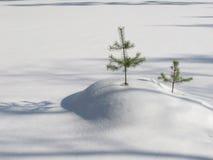 hillocks снежные Стоковая Фотография RF