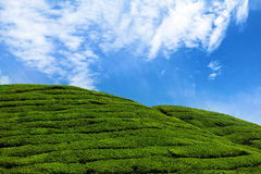 Hills. Green hills on a tea plantation Stock Photo