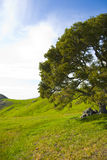 Hills. Overlooking a hill in central california. rolling hills and trees Royalty Free Stock Photos