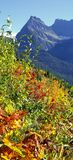 The Hills are Alive with the Colors of Fall stock image
