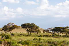 Hills of Amboseli. Landscapes of Eastest Africa. Stock Photo