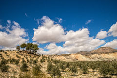 Hills of Andalusia Royalty Free Stock Images