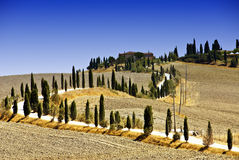 Hills around Siena Royalty Free Stock Image