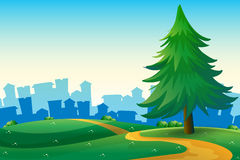 Hills with a big pine tree near the tall buildings Stock Image