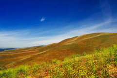 Hills of California. Flowers, freedom, grass Stock Photo