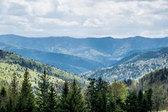 Ukrainian mountains in spring. Hills of Carpathian Mountains in Ukraine. Natural landscape with awaking colors of forests in spring stock photography