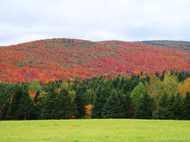 Hills of color offset by bright green foreground, Quebec Canada Royalty Free Stock Images