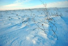 Hills covered with snow, dry plant stem close up, winter landscape, bright blue sky royalty free stock photo