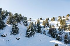 Hills covered with snow and forest in Uzbekistan, Tian Shan. Winter landscape in the mountains