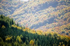 Hills in distance. View across a forest valley at autumn with evergreens and colorful deciduous foliage mixed together in a pretty landscape Royalty Free Stock Photo