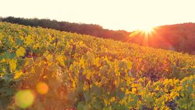 The hills and fields with vineyards are illuminated by the setting sun stock video footage