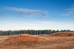Hills and forest in morning sunlight Royalty Free Stock Photography