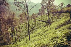Hills in forest with tea plantations with trees and lush of green. Sri Lanka landscape.  Stock Photos