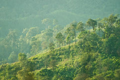 Hills with forest Royalty Free Stock Images
