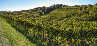 Hills full of rows of grapevines stock images